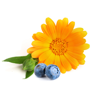 Blueberry and Marigold extract