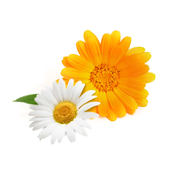 Chamomile and Marigold extract